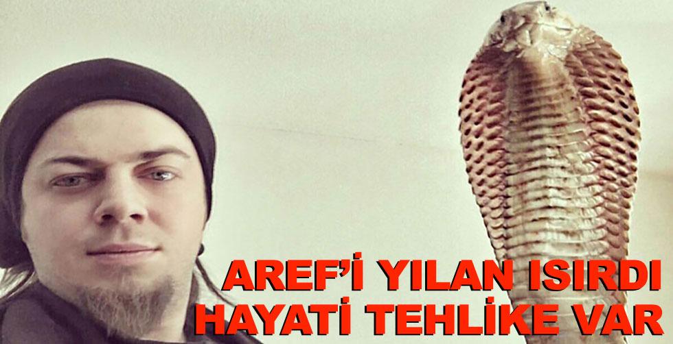 Aref'i yılanı ısırdı: Hayati…