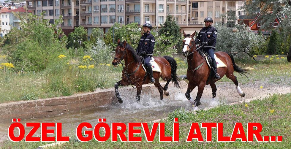 Jandarmada özel görevli atlar!..